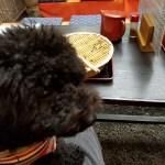 調布市にある神代植物公園近くのお蕎麦屋とドッグランに行ってきました
