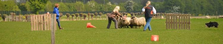 trainingen schapendrijven outrun