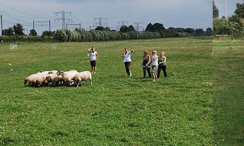 schapendrijven teambuilding