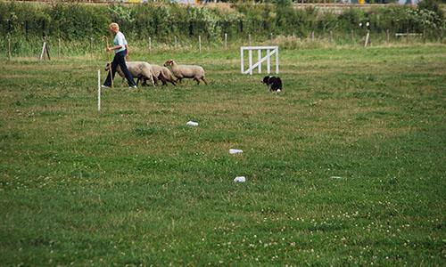 teambuilding schapendrijven