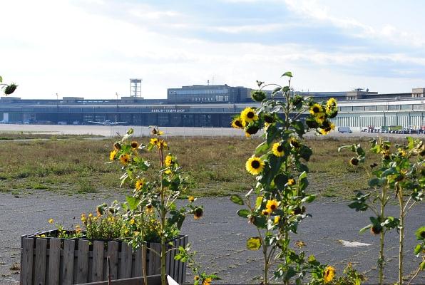 Sonnenblumen und Flughafengebäude in Berlin-Tempelhof - Foto: © 2014 by Schattenblick