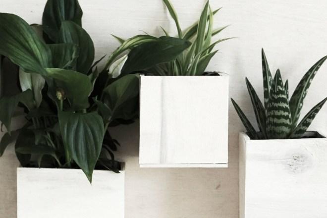 DIY Pflanzen-Bild