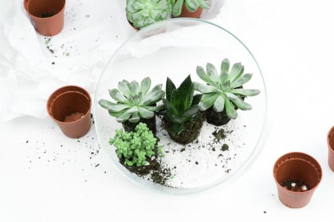 schereleimpapier DIY und Upcycling Blog aus Berlin - kreative Tutorials für Geschenke, Möbel und Deko zum Basteln -Adventskranz basteln mit Sukkulenten