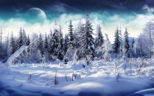 Schneebehangene Nadelbäume vor einem dunkelblau wolkigen Himmel mit Mond