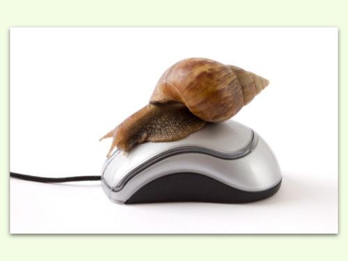 snail-mouse
