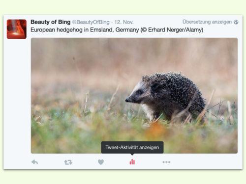 tweet-aktivitaet-anzeigen
