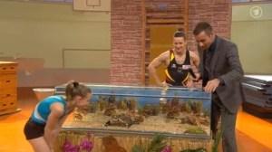Schildkroete in deutscher TV Show als Trostpreis verschenkt falsche unartgerechte haltung