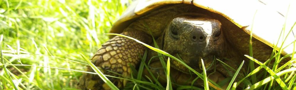 Die möglichen Auswirkungen des Klimawandels auf Schildkröten