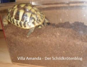 Überwinterrungskiste griechische Landschildkröte Testudo hermanni Boettgeri . Villa Amanda - Der Schildkrötenblog