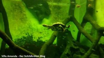 Schildkröte Frankfurter Zoo
