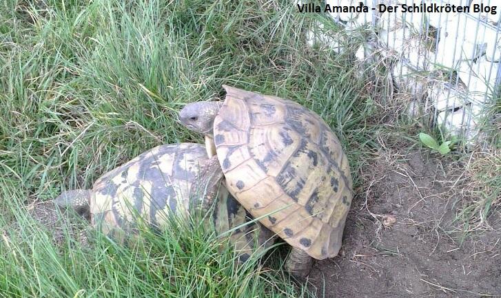 Herbstliche Frühlingsgefühle bei unseren Schildkröten