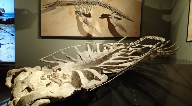 Die größte Schildkröte der Welt – Archelon ischyros