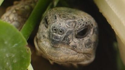 Geruchssinn der Schildkröte – Was schildkröten alles riechen können