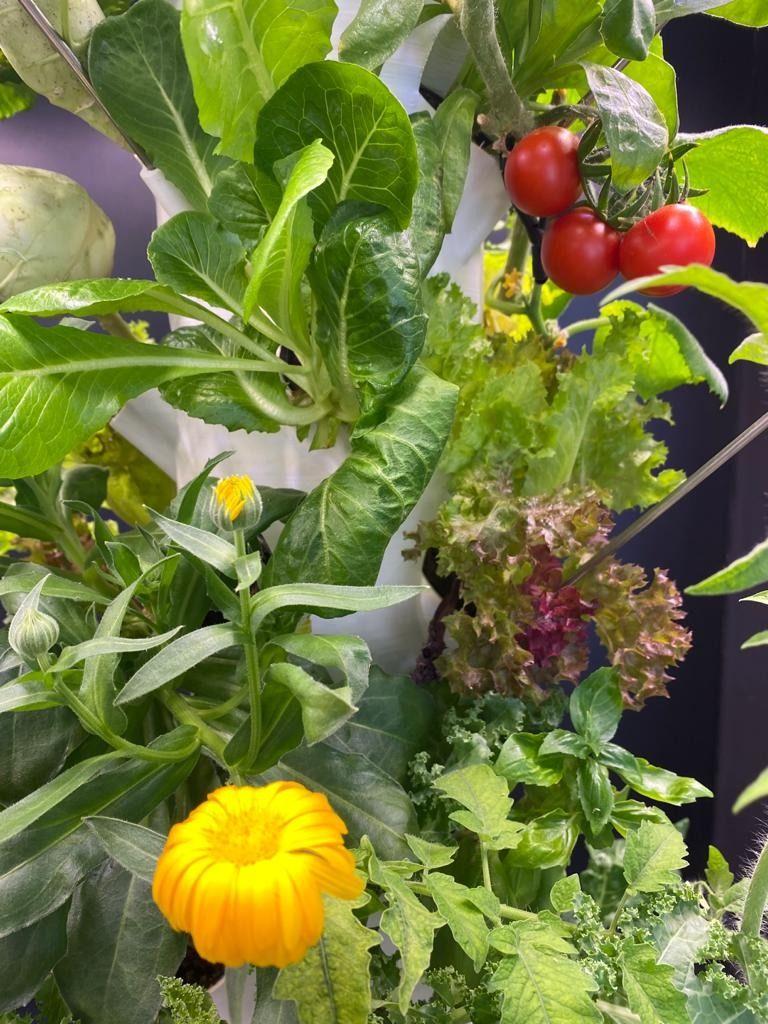 Hydroponik – Dein Garten und Gemüseladen in der Wohnung: Frischer Salat, Beeren. Gemüse und Kräuter ohne Gartenarbeit!