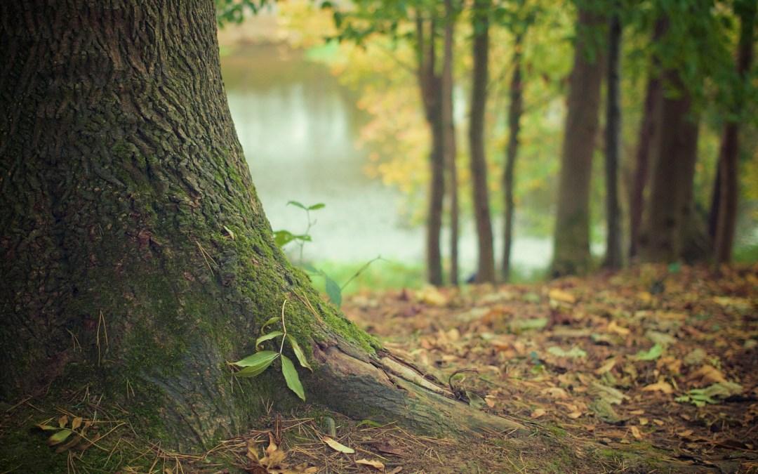 3 tips voor een prachtige herfst