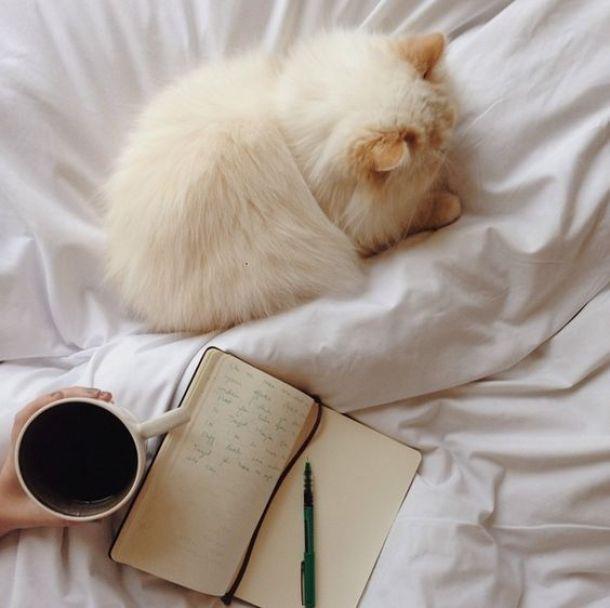 Leven zonder koffie, alcohol en suiker