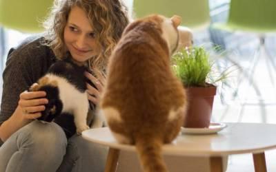 GRONINGEN | Hostel & Kattencafé