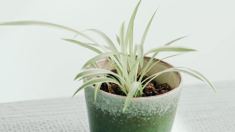 Pflanzen Schlafzimmer Allergiker