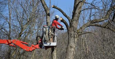 Schlitz Audubon Wisconsin Arborist Association