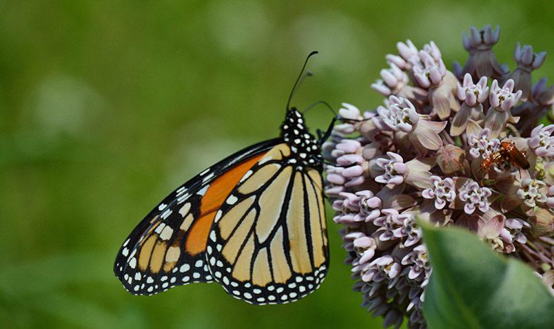 Careers and Internships Schlitz Audubon