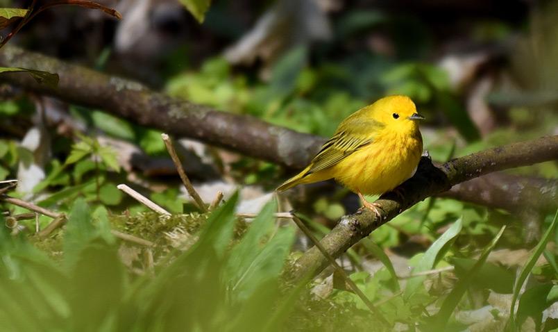 thank-you-form-schlitz-audubon
