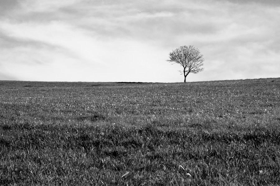 Lonley_tree-1