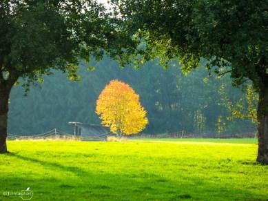 golden_tree