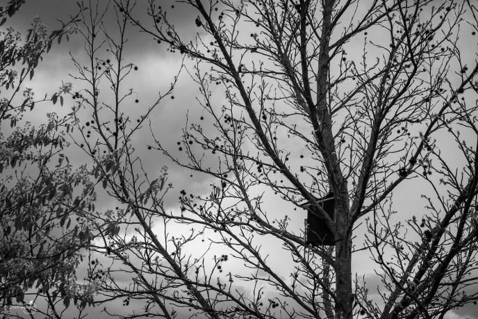 Bird_House I