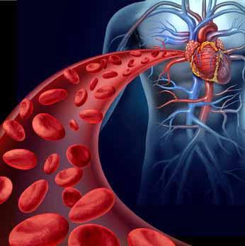 Entzündung Blutgefässe Vaskulitis
