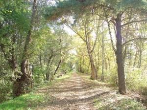 Rottuweri im Herbst