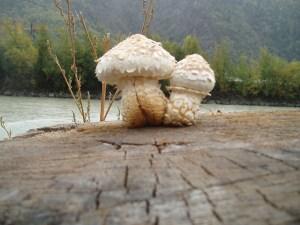 Pilze am Rhonedamm