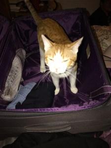 packingcat