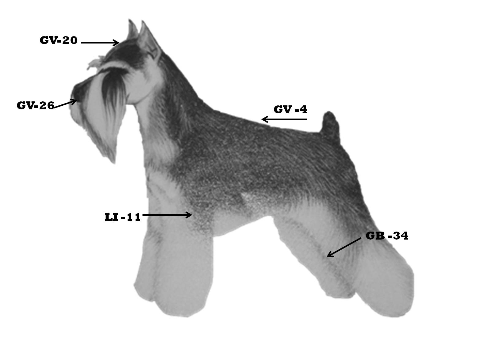 Acupressure for Dogs
