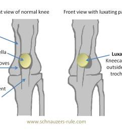 luxating patella means that the patella is moving out of its normal orientation  [ 1339 x 889 Pixel ]