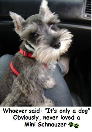 Dog Quotes Dog Sayings And Dog Poems