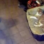 Katze im Hundekörbchen