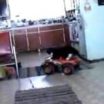 Katze fährt mit ferngesteuertem Auto mit