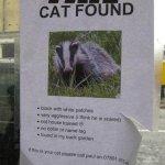 Katze gefunden