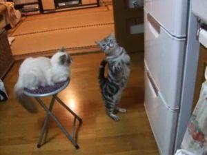 katzenbeschwoerenkuehlschrank_wwwschneeseicherch