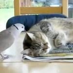 Vogel ärgert Katze