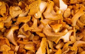 Pilzgulasch – Pfifferlinge mit Semmelknödel