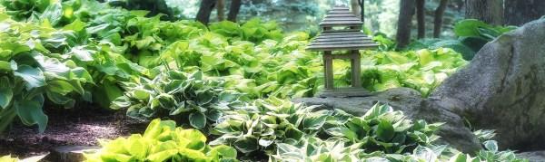 hosta garden - schnormeier gardens