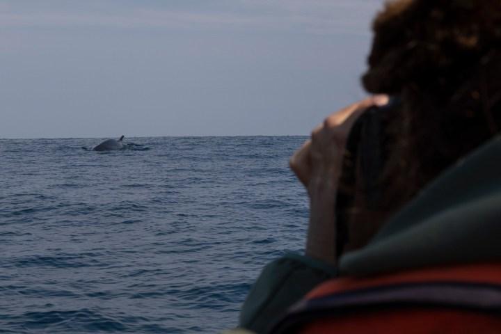 Wal gefunden