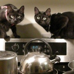 Cats In The Kitchen Table Ideas Concert Schoen Duo