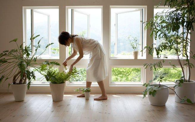 Zimmerpflanzen  schne Arten fr jeden Standort und
