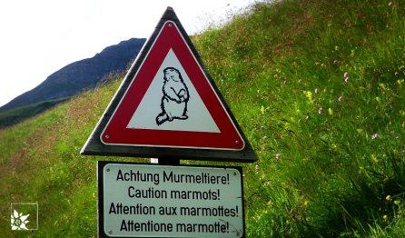 Murmeltierwarnung