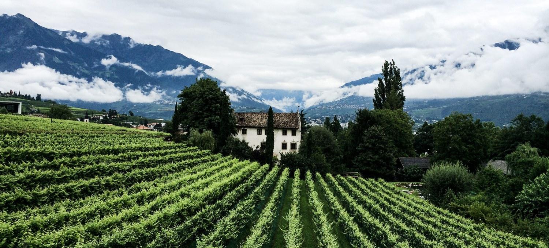 Weingut Kränzelhof im Meranerland