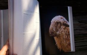 Das kulinarische Erbe der Alpen - Blick ins Buch