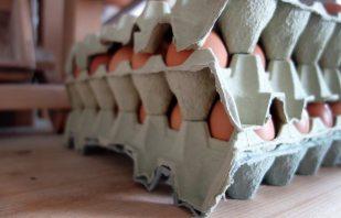 Fuchsmühle Anthering - Frische Eier