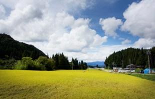 Reisfeld japanische Alpen